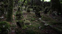 At the bottom of the garden (Matt West) Tags: gnome myth stone moss garden asleep sleep woods dark spirit fairy gnomereserve flickrsbest
