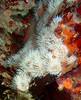 white tentacles (richie rocket) Tags: scillies seasearch scillyisles cornwall uk underwater scuba diving