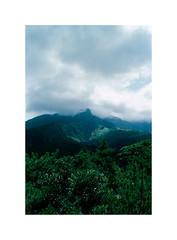 10 (LightWithoutHeat) Tags: フィルム 日本 japon japan film analog argentique imacon filmisnotdead nikonf5 filmphotography grainisgood staybrokeshootfilm sakurajima 135 c41 桜島 fujicolorc200 trees island volcano landscape