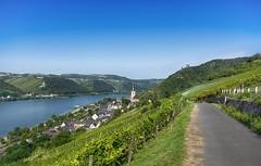 Lorch am Rhein und Burgruine Nollig (Frawolf77) Tags: lorch am rhein nollig weinstadt