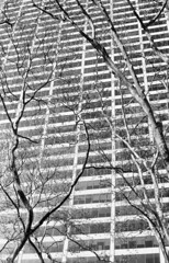 Grace Building (Mattron) Tags: nyc trees newyork film analog skyscraper fuji pentax manhattan bryantpark acros handprocessed gracebuilding ks1000