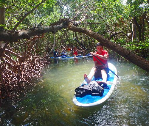 5-17-15 JackDee_Terry & Co Paddleboard Tour Sarasota  (20)