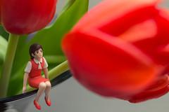保護色のフチ子さん (satoshikom) Tags: flower kitchen tulip canonef28mmf18usm canoneos60d canonspeedlite430exii フチ子