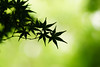 ILCE-6000_2015135_DSC08836 (Sicong (OFF for a while)) Tags: green nature leaves leaf sony jardindesplantes a6000 sal135f18za sonnart18135