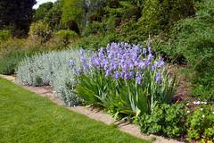 HintonAmpnerMay095 (MikeLane) Tags: uk flowers sunshine fleurs spring nt south hampshire nationaltrust printemps springflowers springtime hintonampner