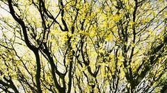 Yellow maze (danielasd) Tags: tree art nature yellow photography photographer youngphotographer newartist newphotographer