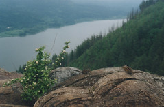 Angel's Rest 8, 2016 (Sara J. Lynch) Tags: sara j lynch columbia river gorge pacific northwest oregon angels rest rocks view ground squirrels rodents summit