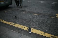 (Mrs.Black&White) Tags: edinburgh edinburghinternationalfestival road yellowline feet pigeons birds