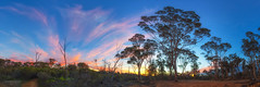 Yornaning Dam Sunset (Astronomy*Domine) Tags: yornaning dam panorama pano westernaustralia sunset clouds winter trees canon 6d samyang 14mm camping