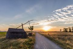 Sunrise at lange lacke neusiedlersee (Sebo23) Tags: sunrise sonne sun sonnenaufgang neusiedlersee langelacke nature lichtstimmung light canon6d canon24704l