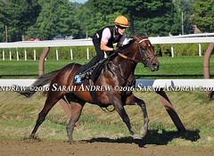 Exaggerator works at Saratoga (Rock and Racehorses) Tags: webexaggeratorska3806sarahandrew ny thoroughbred myra racehorse saratoga nyra exaggerator soap suds detail