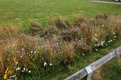 Aftermath of the..... (tiger289 (The d'Arcy dog supporters club)) Tags: eastpreston westsussex villagegreen dogs penangvillagerestaurant flowers trees beach waves breakwaters sea searoad sealane heraldry architecture clockhouse clocktower plaques villagelife cars boules fairground villagefestival park greenbelt plant tree landscape woods outdoor garden estate flowerbeds wildflowers