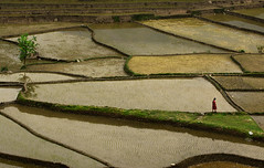 Nepali rice fields (Ivo De Decker back from holiday) Tags: ricefields reflection nepal nepali water landscape travel outdoor scenery scenic ivodedecker