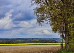 am Feld (Gnter Hickstein) Tags: rural landscape feld landschaft uelzen jgerstand molzen gnterhickstein schwarzwildpopulationssregulatorstand