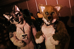 VF 2015 Day 4 Card 7 225sfx (Univaded Fox) Tags: coyote canada lights hotel dance furry wolf smoke cyan columbia convention burnaby british executive 2015 fursuits sairys vancoufur univaded