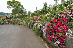 20150523-DS7_0770.jpg (d3_plus) Tags: street bridge sea sky plant flower building nature rose japan garden walking spring scenery outdoor fine wideangle daily architectural bloom  streetphoto   shizuoka    dailyphoto  izu  atami thesedays superwideangle     fineday      tamron1735  a05    tamronspaf1735mmf284dildasphericalif  tamronspaf1735mmf284dildaspherical architecturalstructure d700    nikond700 tamronspaf1735mmf284dild tamronspaf1735mmf284  nikonfxshowcase