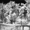 Port Crescent Park IR (scott_z28) Tags: camera trees bw tlr film nature monochrome mi landscape ir blackwhite michigan dunes surreal hc110 greatlakes trail infrared boardwalk epson v600 yashica hoya 635 efke r72 saginawbay sunny16 dilutionb portcrescent ir820 iso1