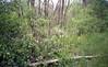 June Along The Trail (Alan Yahnke) Tags: pointandshoot waterproofcamera kodak400film canonsureshota1 redcedartrail pointandshootfilmcamera epsonv750scanner