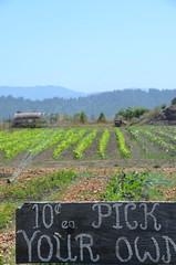 Humboldt County Fruitstand (Rob.Bertholf) Tags: humboldt farmers market fruitstand humboldtcounty hydesville youpick bestfarmersmarket