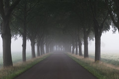 Misty summer morning (esmeecadoni) Tags: woods europe netherlands beautifulearth trees tree sony outdoor morning holland fog photography light littlethings landscape green forest simple simplicity summer mist minimal minimalistic nature
