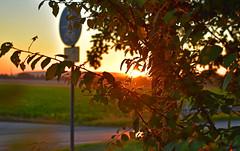 Guten Morgen Deutschland (Gnter Hentschel) Tags: deutschland gutenmorgen gutenmorgendeutschland morgen germany germania alemania allemagne europa nrw sonne sonnenschein sonnenaufgang windrder hentschel gnter outdoor flickr guenter nikon d5500 nikond5500 sunsets sun sunrise