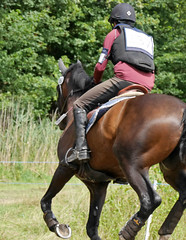 P1270770 (serita.vossen) Tags: horse horses eventing cross jumping paarden emmeloord ruiters amazones