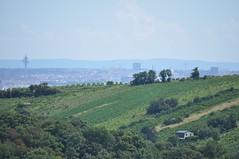 sDSC_0068 (L.Karnas) Tags: wien vienna wiede    viena vienne sommer summer 2016 leopoldsberg aussichtspunkt nasenweg panorama