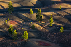 Pines in the Painted Dunes (Kurt Lawson) Tags: ash basalt beds ca california cinder cinders cone dune dunes fantastic lassen lava national needles oxidation oxidized park pine pumice tree trees volcanic wilderness unitedstates