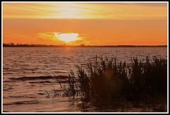 Estuaire de la Gironde (Les photos de LN) Tags: coucherdesoleil sunset estuairedelagironde fleuve aquitaine sudouest roseaux berges couleurs lumire ciel horizon nature lumires reflets paysage t