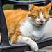 Buurkat / Neighbouring cat
