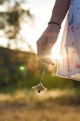 4 (deborahkaralou) Tags: sunset libert freedom peaceful flower fleur vacances holidays provence sud