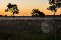 Spiderweb Sunrise (Jorick77) Tags: rozendaal gelderland nederland nl veluwe spinneweb sunrise spiderweb grass gras landschap morning trees bomen d7200 nikon nikond7200 rozendaalsveld