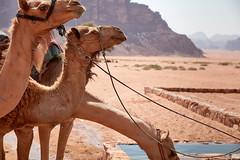 Water Break - Wadi Rum, Jordan (Philippe Kassouf) Tags: orange wadirum jordan