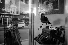 never.more (jonathancastellino) Tags: street toronto reflection glass typewriter walking store storefront figure raven poe edgarallenpoe theraven