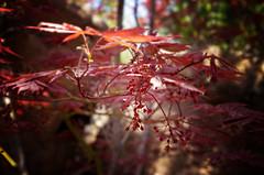 Leaves (Samtian) Tags: