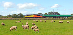 56113 at Willington (robmcrorie) Tags: train grid sheep dale farm aviation derbyshire rail class lambs rolls derby freight royce fuel 56 tanks peartree grangemouth willington colas sinfin 56113 dalefarm 6s96
