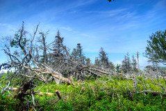 (Melissa Godbout) Tags: capebreton cabottrail cabot novascotia canada atlantic east eastcoast hike forest trees deadtrees highlands sky
