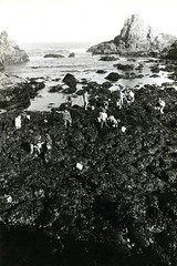 Rocky coastline, tide pools, and students (A) (PUC Special Collections) Tags: california coastal mendocino 1960s norcal 1970s biology tidepools puc albion estuaries mendocinocounty pacificunioncollege albionfieldstation albionbiologicalfieldstation pucbiologydepartment