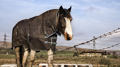 Another Horse (Jay-Aitch) Tags: another horse equine fence animal farm