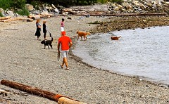The Doggie Beach . (ikan1711) Tags: park red people dog beach dogs lady beaches cutedogs dogbeach redcoat dogwalker largedogs beachscenes tinydogs alldogs justdogs parkscenes allbeaches amblesidewestvancouverbc waterwaterscenes midsizedogs allbeachscenes