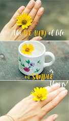Beauty is in a simple things (ddanilejko) Tags: flowers light summer white macro cup nature water floral beauty yellow swim outdoors daylight wooden cozy colorful warm soft mood bright little bloom teacup liquid tenderness aroma cosiness