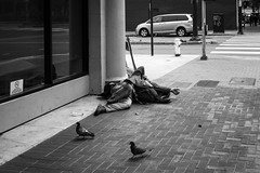 'Clay Pigeons' (JEMiguel007) Tags: nikon gritty white black street candid pigeons sanfrancisco jmp sf
