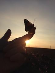 little friend #butterfly #summer #nature #sky #sunset (sisief) Tags: butterfly summer nature sky sunset