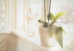 Light WW (BirgittaSjostedt-away on vacation, back Augusty 1.) Tags: window spring light sun sunny shop flower antiques texture dirty grunge indoor pastel birgittasjostedt windowwednesday