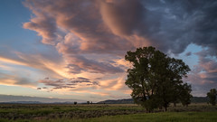 Antelope Flats (Jeremy Duguid) Tags: grand teton national park tetons antelope flats jackson hole wyoming landscape landscapes nature clouds cloudscapes travel traveling outdoors sunset dusk trees plains jeremy duguid sony west western usa mountains fields evening summer wy
