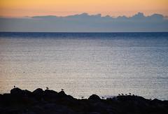 Evening By The Sea (bjorbrei) Tags: sea water ocean coast evening birds seagulls sandbag allinge bornholm denmark