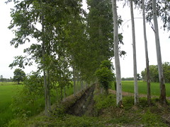 khanna-plantings-thailand (4) (The Forest Trust) Tags: khanna plantations thailand takenbybartschneemann timber wood