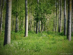 The Perfect Forest (katrienberckmoes) Tags: perfect forest springtime sunny day landscape
