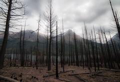 Forgotten Land (Lightcrafter Photography) Tags: fire montana lightcrafterphotography danielkessel moody atmosphere charred glaciernationalpark nationalpark