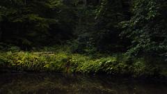 Happy Bench Monday (Netsrak) Tags: rheinbach nordrheinwestfalen deutschland de tree trees baum bume wald forst forest woods reflection reflektion wasser teich water pond diesiebenweiher weiher landscape landschaft licht light schatten shadow
